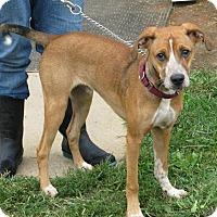 Adopt A Pet :: Jay - Richmond, VA