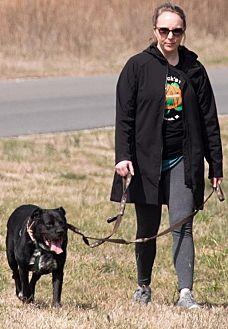 Labrador Retriever/Dalmatian Mix Dog for adoption in Midlothian, Virginia - Popeye