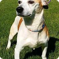 Adopt A Pet :: Igor - Ashtabula, OH