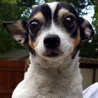 Adopt A Pet :: The Governor - Decatur, GA