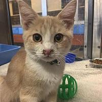 Adopt A Pet :: Sherbet - Beckley, WV