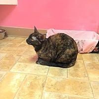 Adopt A Pet :: Yoga - Monroe, LA