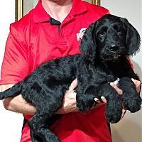 Adopt A Pet :: Murphy - Gahanna, OH