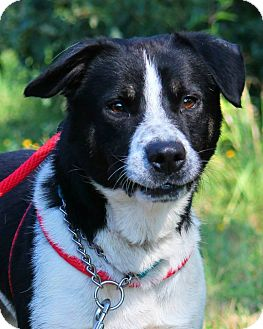 Pointer Mix Dog for adoption in Manahawkin, New Jersey - Oreo