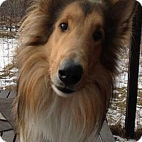 Adopt A Pet :: Chester - Minneapolis, MN