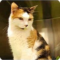 Adopt A Pet :: Honey - Modesto, CA