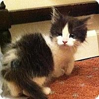 Adopt A Pet :: Louie - Harriman, NY