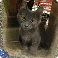 Adopt A Pet :: DOYLE - Diamond Bar, CA