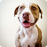Adopt A Pet :: Lola - Santa Barbara, CA