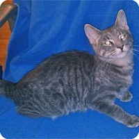 Adopt A Pet :: K-Sasha5-Keith - Colorado Springs, CO