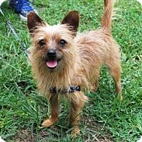 Adopt A Pet :: Desi - Minneola, FL