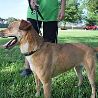 Adopt A Pet :: JASMINE - Beaumont, TX