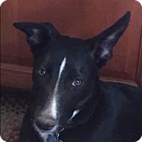 Adopt A Pet :: JOSEY - San Pedro, CA