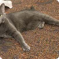 Adopt A Pet :: Beatrix - Merrifield, VA