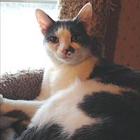 Adopt A Pet :: Mario - Wayland, MI