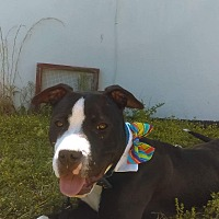 Adopt A Pet :: Cash - Williamsburg, VA
