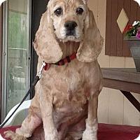 Adopt A Pet :: Isabella - Santa Barbara, CA