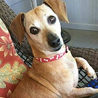Adopt A Pet :: Raybert - Decatur, GA