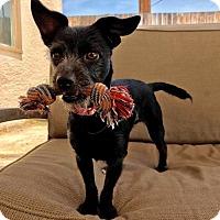 Adopt A Pet :: Lizzie - Orange, CA