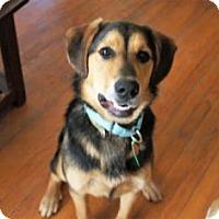 Adopt A Pet :: Shari - Rockville, MD