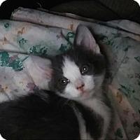 Adopt A Pet :: A-Frame - Encinitas, CA