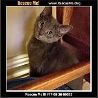 Adopt A Pet :: Ashley - Waldorf, MD