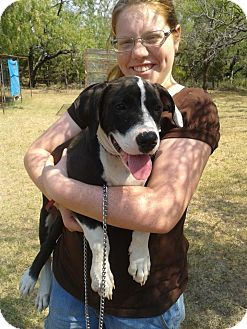 Border Collie/American Staffordshire Terrier Mix Dog for adoption in Ranger, Texas - Axle