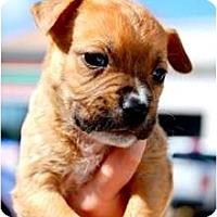 Adopt A Pet :: Pilot - Orlando, FL