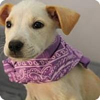 Adopt A Pet :: Simba - South Jersey, NJ