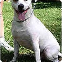 Adopt A Pet :: Kane - Hoffman Estates, IL