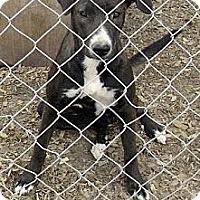 Adopt A Pet :: Olive - Moulton, AL