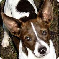 Adopt A Pet :: Betsy - Wakefield, RI