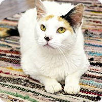 Adopt A Pet :: Lydia - Xenia, OH