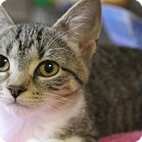 Adopt A Pet :: Sugar Plum - Byron Center, MI