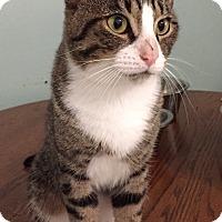 Adopt A Pet :: Monty - New Port Richey, FL