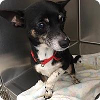 Adopt A Pet :: Quesadilla - Westminster, CA