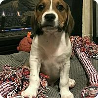 Adopt A Pet :: Big Boy - Las Cruces, NM