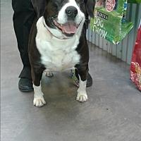 Adopt A Pet :: Rosie - Barnwell, SC