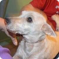 Adopt A Pet :: Christina - Prole, IA