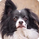 Adopt A Pet :: Sonny