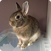 Adopt A Pet :: Davey - Newtown Square, PA
