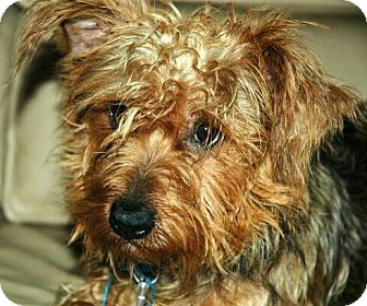 Terrier (Unknown Type, Medium) Mix Dog for adoption in Antioch, California - Booger