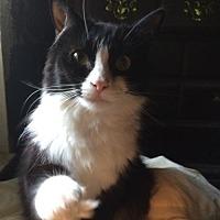 Adopt A Pet :: Gladys - Orlando, FL
