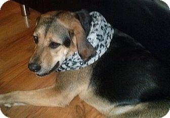 Shepherd (Unknown Type) Mix Dog for adoption in Hamilton, Ontario - Sasha