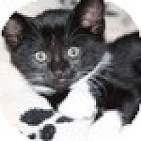 Adopt A Pet :: Squeaky - Vancouver, BC