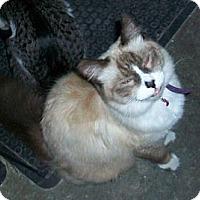 Adopt A Pet :: Bookie - lake elsinore, CA