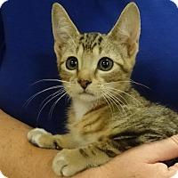 Adopt A Pet :: MIKEY - Diamond Bar, CA