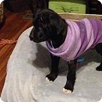 Adopt A Pet :: Anna - Marlton, NJ