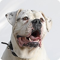 Adopt A Pet :: Rooney - Los Angeles, CA