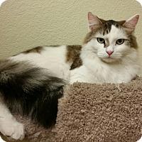 Adopt A Pet :: Han - Phoenix, AZ
